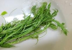 シオデという山菜の写真
