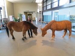 ホンモノの木曽馬(空号)と当館展示(製作)の木曽馬との貴重なツーショット