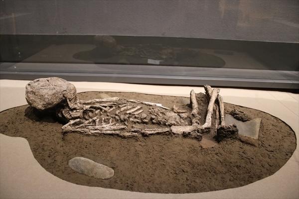 縄文時代の子どもの人骨の写真